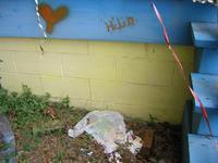 Helenheart_f3900ede98.JPG